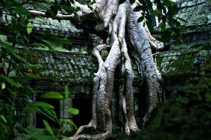 brown tree trunk near green wall